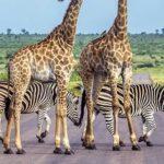Jihoafrická Republika safari dovolená