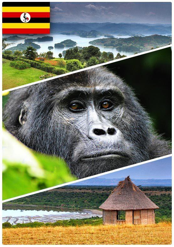 Safari dovolená v Ugandě